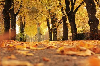 alley-autumn-autumn-colours-235721.jpg
