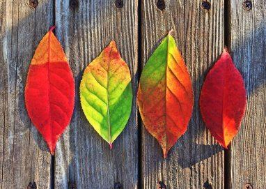 autumn-colorful-colors-33158.jpg