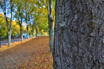 autumn-fall-leaves-284988.jpg