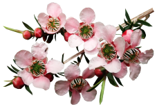 flowers-3739284_1920.png