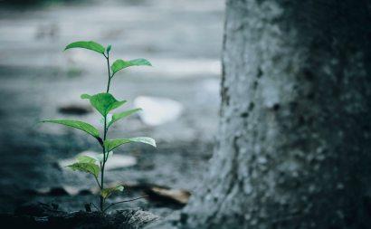 bright-ecology-environment-1645226.jpg